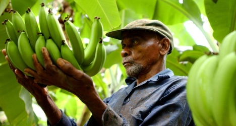 Une banane issue du commerce équitable, qu'est-ce que cela représente ?