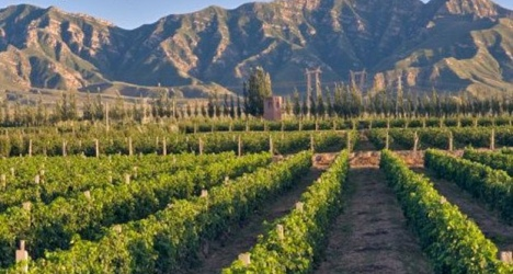 LVMH investit dans la production de vin rouge en Chine